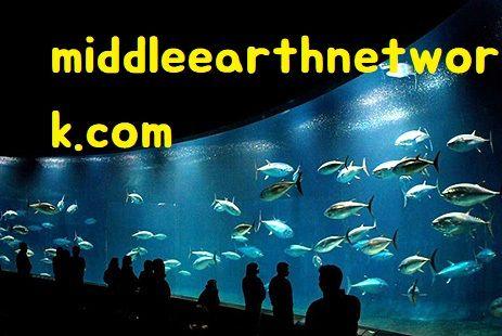 middleearthnetwork.com